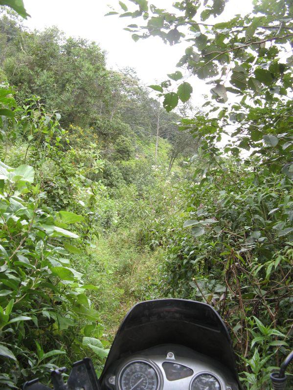 730 jungle