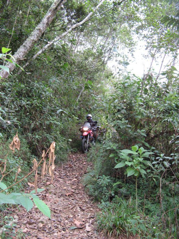 731 jungle